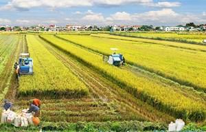 Cần đội ngũ nông dân chuyên nghiệp