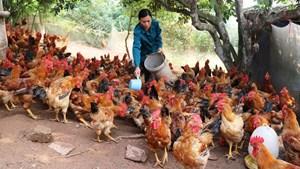 Thịt ngoại giá rẻ ồ ạt xâm nhập thị trường: Áp lực lên ngành chăn nuôi