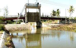 Đồng bằng sông Cửu Long: Gần tết, lo chống mặn
