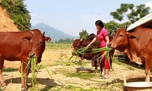 Thanh Hóa: Giảm nghèo bền vững