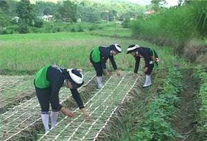 Cẩm Thủy (Thanh Hóa): Cuộc sống người dân ngày càng nâng cao