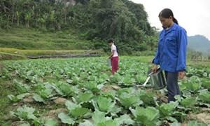 Bắc Kạn: 118 hợp tác xã hoạt động hiệu quả, nâng cao đời sống nông dân