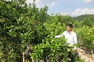 Bắc Kạn chú trọng sản xuất nông nghiệp gắn với chuỗi giá trị