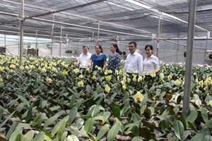 Bắc Ninh: Giá trị sản xuất của làng nghề đạt hơn 8% GDP
