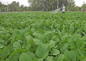 Bắc Ninh: Nhiều chỉ tiêu phấn đấu cho ngành nông nghiệp