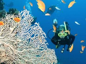Bảo tồn các loài sinh vật biển