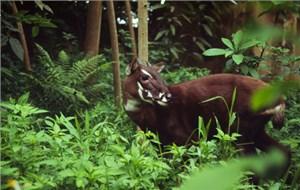 Bảo tồn đa dạng sinh học dãy Trường Sơn