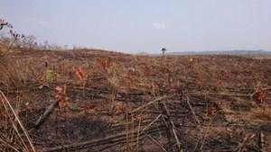 Rừng Tây Nguyên phải được bảo vệ
