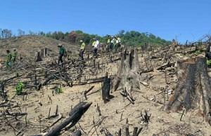 Bắt giam chủ mưu phá hoại hơn 60 ha rừng
