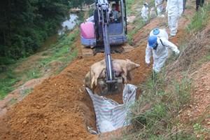 Hà Tĩnh: Dịch tả lợn châu Phi và lở mồm long móng diễn biến phức tạp