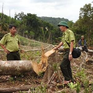 Mong manh những cánh rừng Tây Quảng Trị