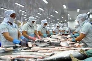 Cá tra rộng đường sang Mỹ