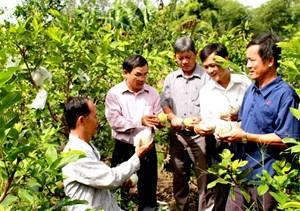 Cần Thơ chung sức giúp nông dân thoát nghèo bền vững