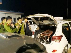 Chở gấu nặng 1 tạ trên taxi để đưa đi tiêu thụ