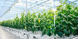 Doanh nghiệp đầu tư vào nông nghiệp: Liên kết để thành công