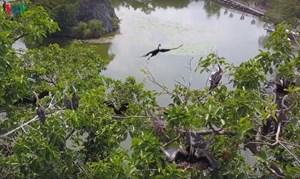 Đồng Nai: Phát hiện hàng trăm con chim cổ rắn quý hiếm