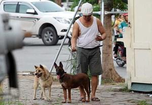 Chó thả rông bị bắt giữ, chủ nuôi phải chịu mọi chi phí