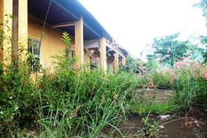 Chủ tịch tỉnh Gia Lai yêu cầu báo cáo vụ 245 phòng học bỏ hoang