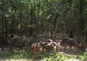 Chung tay bảo vệ thiên nhiên hoang dã