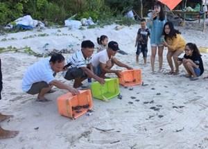 Hơn 1.700 chú rùa ấp nở ở Cù Lao Chàm đã được thả về đại dương