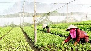 Chuyển dịch hướng tới nền nông nghiệp hữu cơ