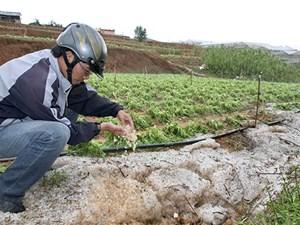 Chuyển dịch nông nghiệp thích ứng biến đổi khí hậu: Cần cơ chế đặc thù