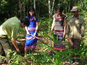 Cùng đồng bào Cơ Tu bảo vệ rừng