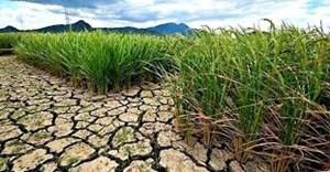 Đề phòng khô hạn trong vụ Đông Xuân 2019-2020