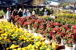 Thông báo khẩn về những ai liên quan đến Chợ hoa Mê Linh
