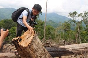 Đắk Nông: bắt giam Chủ tịch xã để mất rừng