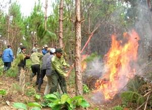 Đắk Nông: Chủ động phòng chống cháy rừng trong mùa khô