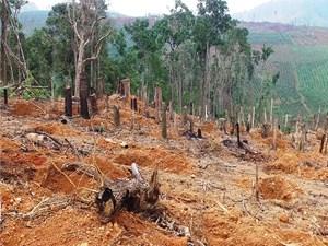 Đắk Nông là địa phương có tốc độ mất rừng nhanh nhất Nam Trung Bộ và Tây Nguyên