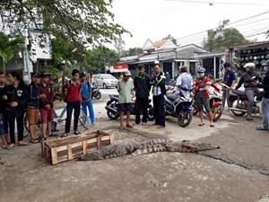 Dân hiếu kỳ đứng xem bày bán cá sấu bên đường