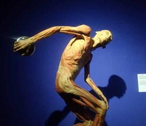 Đề nghị báo cáo về triển lãm cơ thể người
