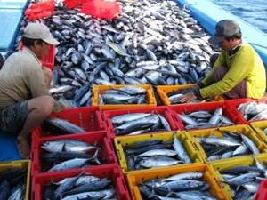 Đề nghị đánh giá việc khắc phục thẻ vàng IUU với thủy sản