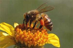 Đời sống loài ong