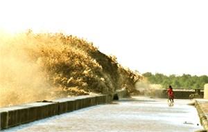 Đồng bằng sông Cửu Long: Cần có giải pháp bền vững với biến đổi khí hậu