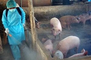 Bổ sung biện pháp phòng, chống  bệnh dịch tả lợn châu Phi