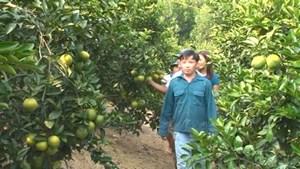 Bắc Ninh: Hơn 120 dự án, ý tưởng thanh niên khởi nghiệp