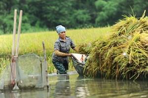 Bất cập từ chính sách đất đai: Nông nghiệp khó phát triển bền vững