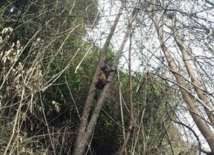 Hà Tĩnh: Thả 3 cá thể khỉ có tên trong sách đỏ về rừng