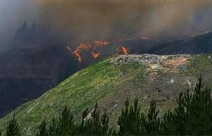 'Bà hỏa' bắt đầu lan đến những cánh rừng của New Zealand