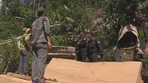 Rừng liên tục bị xâm hại, nguyên lãnh đạo công ty lâm nghiệp bị khiển trách