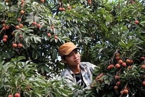 Hoà Bình: Tạo đột phá từ nông nghiệp thông minh