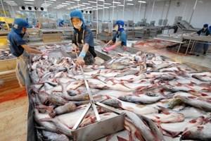 Giá cá tra nguyên liệu tại ĐBSCL tăng mạnh