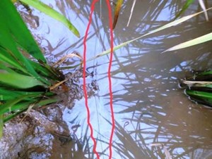 Thái Bình: Tử vong vì vấp phải lưới điện diệt chuột của hàng xóm