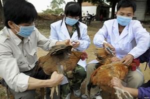 Hà Tĩnh: Xuất hiện cúm A/H5N6 sau bão số 10