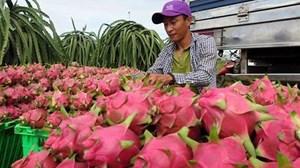 Hoa quả xuất sang Trung Quốc sẽ bị truy xuất nguồn gốc từ 1/4