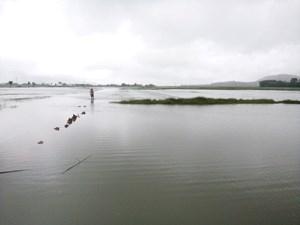 Hơn 10.000 ha lúa, hoa màu của người dân Hà Tĩnh bị ngập lụt