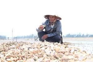 Hơn 120 ha ngao, sò chết ở Hà Tĩnh 'do sương muối'